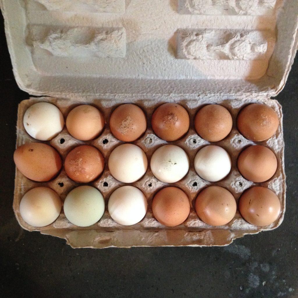 karla eggs